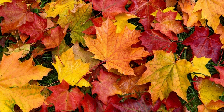 Scatti con cornice. Inquadra e fotografa le foglie autunnali
