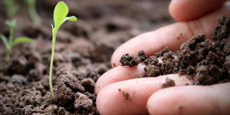 Ecosistema Benessere – La salute umana passa dal capitale naturale