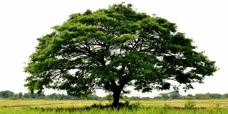 I grafi ad albero: impariamo a costruirli!