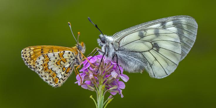 Speciale ambiente - La biodiversità per un futuro sostenibile