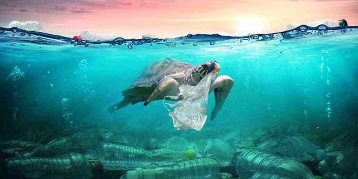 Dove finisce la tua bottiglietta di plastica?